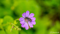 no name ( ID=2226260 ); comments:3