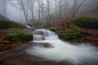В мъгливата гора; comments:9