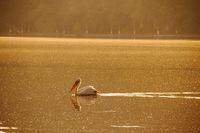 Езерото с пеликаните; comments:10