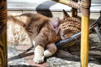 Котка, нощна смяна е била; comments:3