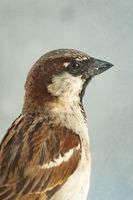 Портрет на една птица; comments:1