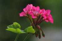 no name ( ID=2229342 ); comments:6