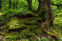 В гората; comments:5