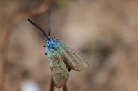 no name ( ID=2231549 ); comments:2