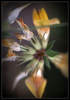 no name ( ID=2237306 ); comments:4
