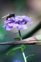 no name ( ID=2242126 ); comments:3