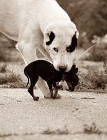 Кучето чакаше удобният момент; comments:2