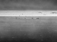 Утро на сребърното езеро...; comments:5