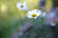 no name ( ID=2244820 ); comments:3