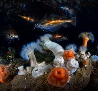 Някъде по дъното на Северно море; comments:11