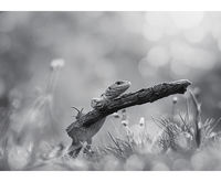 no name ( ID=2245240 ); comments:26