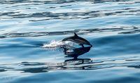 Делфин; comments:6