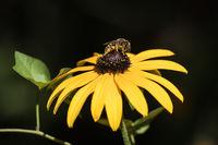 Пчела и цвете; comments:2
