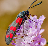 no name ( ID=2246130 ); comments:4