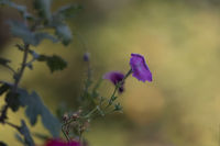 no name ( ID=2246213 ); comments:1