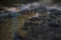 Малък крокодил; comments:13