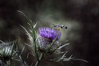 no name ( ID=2246624 ); comments:7