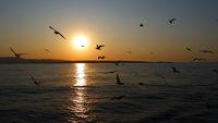 Залезът с чайките ! ;); comments:9