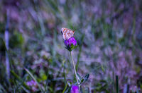 no name ( ID=2247145 ); comments:2