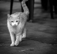 Дебнеща котка; comments:1