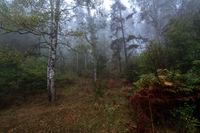 Мъглива есен; comments:5