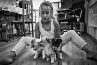 Габи и кучетата; comments:3