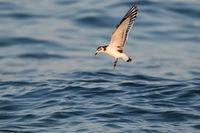 Малка чайка; comments:6