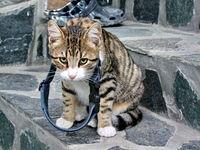 Тежко ми е ...как ги носят кучетата тия каишки ... това ми скъса врата; comments:4