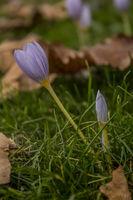 Есен в тревата; comments:7