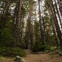 Из гората; comments:2