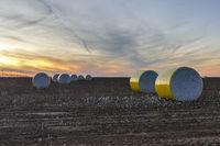 Полетата с памук на Западен Тексас; comments:6
