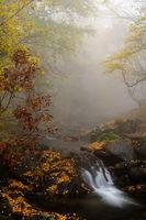 В мъгливата прегръдка на есента; comments:11