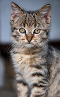 Little Kitten; comments:3
