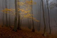 Есен в гората; comments:10