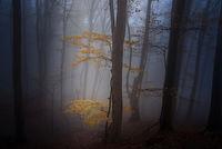 Есен гора мъгла; comments:9