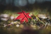 Капят последните есенни листа; comments:3
