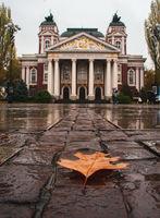Есен в градски условия; comments:3