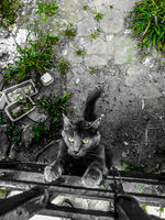 Котенце; comments:1