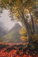 Есен в Северозапада; comments:8