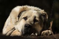 За какво мечтаят кучетата?; comments:3