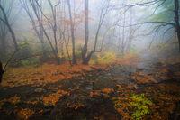 Есен в мистичната гора; comments:2