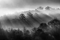 В гребена на утрините лъчи; comments:21