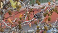 Пролетни напъни през декември...; comments:4