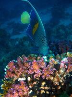 OLYMPUS Подводна фотографска система E-PL5 + 14-42mm; comments:6