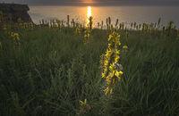 Изгрев с щастлив охлюв върху жълто цвете; comments:4
