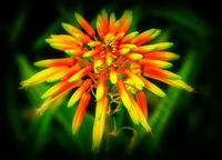 no name ( ID=2275181 ); comments:8