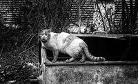 Нерадостният живот на едно коте; comments:9