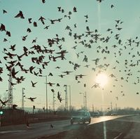 Птици, пътища, автомобили; comments:5
