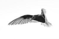 Плясък на крила; comments:4