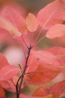 no name ( ID=2276117 ); comments:12